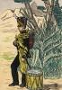 Барабанщик пехотного полка герцогства Нассау Великой армии Наполеона, принимавшего участие в Испанской кампании. Коллекция Роберта фон Арнольди. Германия, 1911-29