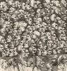 Битва картин, 1743. Гравюра создана в качестве «визитной карточки» торгового представителя Хогарта на аукционе. Сюжет ассоциируется с «Битвой книг» Свифта: картинам мастера противостоит множество творений ремесленников. Лондон, 1838