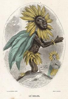 Веселый подсолнечник молится светилу. Les Fleurs Animées par J.-J Grandville. Париж, 1847