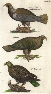 Орлы с добычей. Historia naturalis. Амстердам, 1657