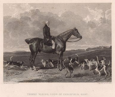 Томас Уоринг, эсквайр, на любимом коне Питере со своими гончими.
