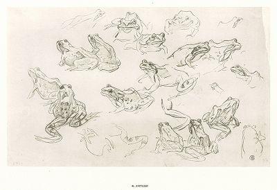 """40. Лягушки. В.А. Серов """"Рисунки к басням А.И. Крылова"""", Ленинград, 1951"""
