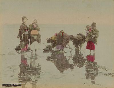 Сбор моллюсков. Крашенная вручную японская альбуминовая фотография эпохи Мэйдзи (1868-1912).