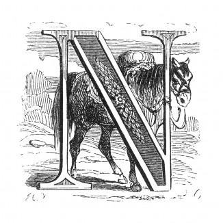 Инициал (буквица) N, предваряющий сороковую главу «Истории императора Наполеона» Лорана де л'Ардеша о последствиях отступления французов, о возвращении Наполеона в Смоленск, о заговоре Мале. Париж, 1840