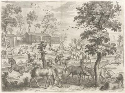 Молодые жеребцы и кобылки на выпасе. La methode nouvelle et invention extraordinaire de dresser les chevaux… л.12 Лондон, 1737
