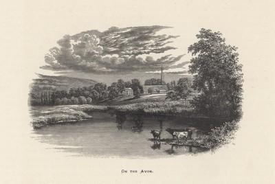 """Три коровы на водопое на реке Эйвон (иллюстрация к работе """"Пресноводные рыбы Британии"""", изданной в Лондоне в 1879 году)"""
