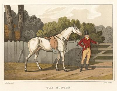 Гунтер - верховая лошадь, особенно подходящая для псовой охоты. The National Sports of Great Britain by Henry Alken. Лондон, 1903