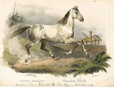Казачья лошадь из конюшни герцога Нортумберленда. Cheval cosaque appartenant au Duc de Nothumberland. Редкая литография Виктора Адама, изданная в Париже в 1827 г.