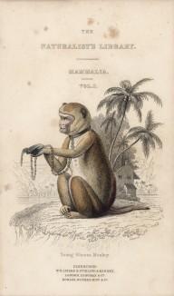 """Титульный лист тома II """"Библиотеки натуралиста"""" Вильяма Жардина, изданного в Эдинбурге в 1833 году и посвящённого великому графу де Бюффону (на миниатюре изображена макака резус, скованная цепями)"""