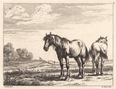 Две лошади. Редкий офорт Жана Шателена по рисункам Дирка Ступа 1651 года.