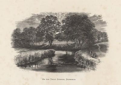 """Форельный ручей в Дриффилде, Йоркшир (иллюстрация к работе """"Пресноводные рыбы Британии"""", изданной в Лондоне в 1879 году)"""
