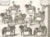 Герцог Ньюкасл даёт урок выездки капитану Мазену (из бестселлера XVII века La Méthode Nouvelle et Invention extraordinaire de dresser les Chevaux... (фр.) герцога Ньюкасла. Антверпен. 1658 год (лист 17))