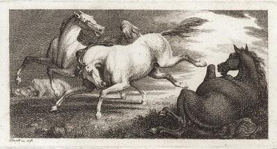Резвящиеся лошади. Офорт Вильяма Хоуитта из серии The British Sportsman. Лондон, 1799