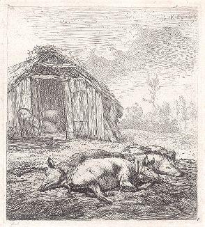 Свинки. Офорт голландского художника и гравера Карела Дюжардена.