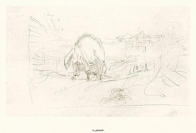 """22. Свинья. В.А. Серов """"Рисунки к басням А.И. Крылова"""", Ленинград, 1951"""