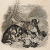 """Титульный лист тома IV """"Библиотеки натуралиста"""" Вильяма Жардина, изданного в Эдинбурге в 1839 году и посвящённого Петеру Симону Палласу (на миниатюре сенбернары спасают путника)"""