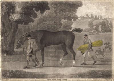 Выгул охотничьей лошади, также называемой гунтер, которая считается самым благородным представителем лошадей-полукровок. Лондон, 1794