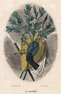 Лавровая ветвь - символ победы и доблести. Les Fleurs Animées par J.-J Grandville. Париж, 1847
