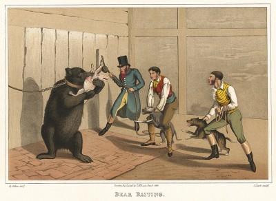 Bear Baiting. Травля медведя травильными собаками. The National Sports of Great Britain by Henry Alken. Лондон, 1903
