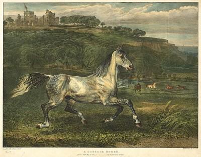 Казачья лошадь. A cossack horse. Редкая литография Джеймса Уорда, изданная в Лондоне в 1824 г.