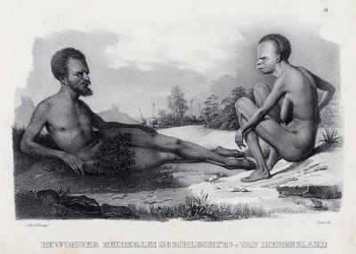 Аборигены Земли Ван Димена (официальное название Тасмании до 1856 года ) (лист 14 второго тома работы профессора Шинца Naturgeschichte und Abbildungen der Menschen und Säugethiere..., вышедшей в Цюрихе в 1840 году)