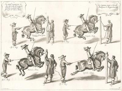 Каприоль -- прыжок лошади на месте и другие элементы манежной выездки, выполняемые под руководством герцога Ньюкасла (из бестселлера XVII века La Methode Nouvelle ... de dresser les Chevaux... герцога Ньюкасла. Антверпен. 1658 год (лист 27))