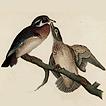 Утки и кряквы