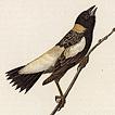 Б. Уоррен. Птицы Пенсильвании