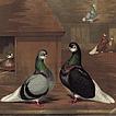 Роберт Фултон. Книга голубей
