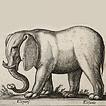Слоны и слонихи