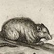 Мыши и мышки