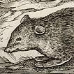 Антонио Темпеста. Мыши XVI века