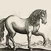 Лошади и ослы