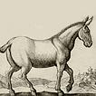 Ослы, мулы и лошаки
