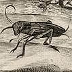 Кузнечики, цикады и саранча