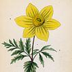 Йозеф К. Вебер. Растения Альп Том I. 1872 год