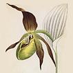 Йозеф К. Вебер. Растения Альп Том IV. 1872 год