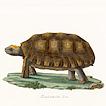 Черепахи и броненосцы