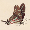 Бабочки Франсуа Мартине
