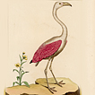 Франсуа Мартине. История птиц