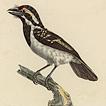 Самые известные птицы