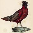 Птицы – трофеи охотников