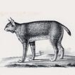 Хищные кошки профессора Шинца