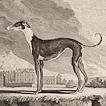 Собаки графа де Бюффона