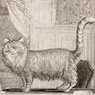 Кошки графа де Бюффона