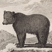 Медведи графа де Бюффона