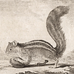 Белки графа де Бюффона