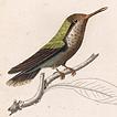Том XVII. Птицы