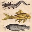 Рыбы профессора Рейхенбаха