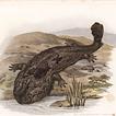 Аксолотль, протеи и саламандры